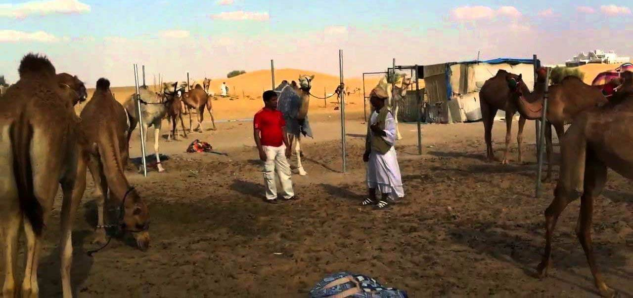 Lisaili Camel Market