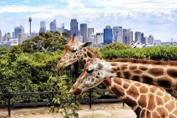 dubai safari park zoo